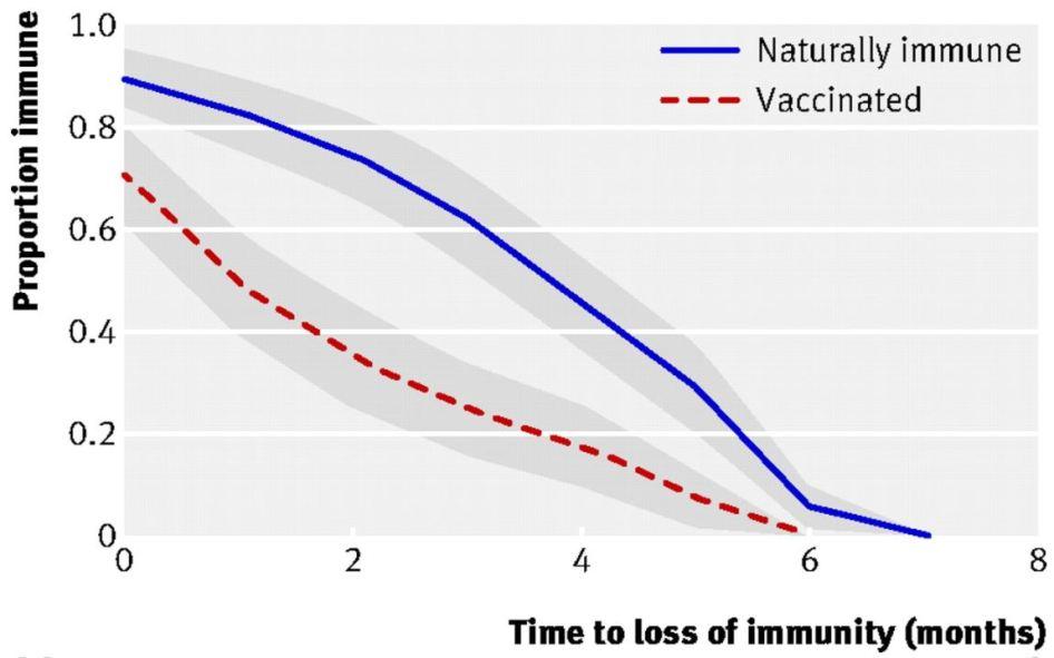 leetrid passiivne immuunsus raseduse ajal saadud antikehad imik vaktsineerimine