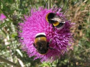 mesilane herilane nõelamine sutsamine mesilasehammustus herilasehammustus kuidas vältida mesilasi herilasi